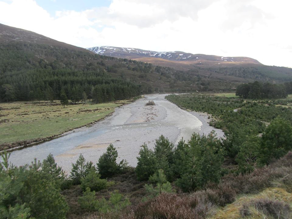 Figure 5. Native forest regeneration in Glen Feshie (Scottish Association of Geography Teachers)